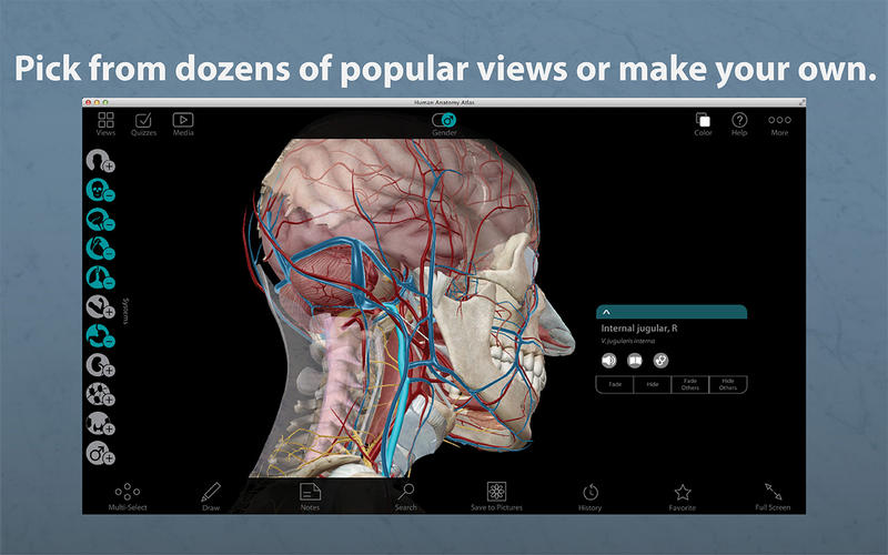 Download Human Anatomy Atlas For Mac Mac Heat