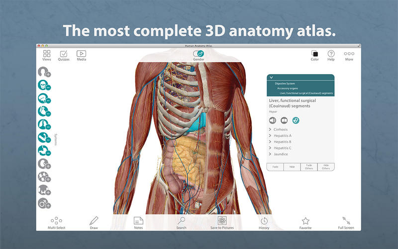 3d Anatomy Of Human Body Free Download